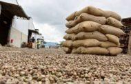 Noix de cajou: Le Conseil Anacarde Coton annonce une suspension des autorisations d'exportation de noix de cajou