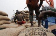 Commerce: La Côte d'Ivoire a enregistré le plus important excédent commercial agricole sur le continent en 2018