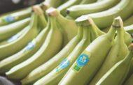 Filière banane: L'Union européenne ne compte pas reconduire le mécanisme de stabilisation de son marché de la banane