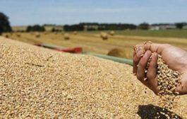 Céréales : la production mondiale atteindra 2,7 milliards de tonnes fin 2019, un record (FAO)